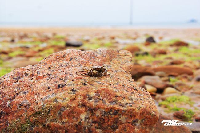 离开草原,一路向东带着BX5来海边捉螃蟹