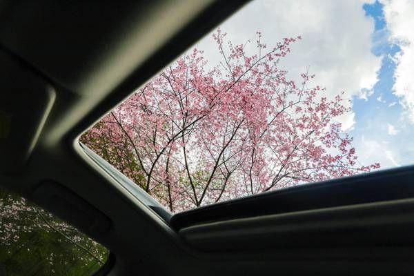 春季赏花攻略驾到,无限春光尽收眼底